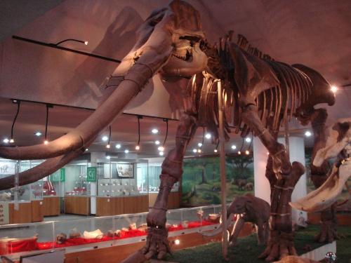 北京有一座主要陈列古动物化石的博物馆