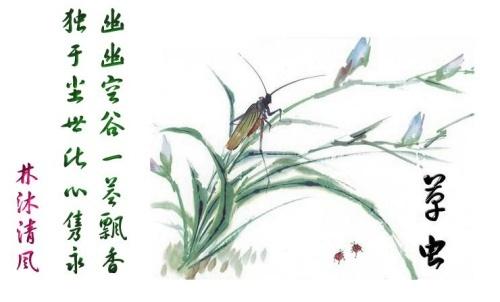 工笔画 图片 白描栀子花