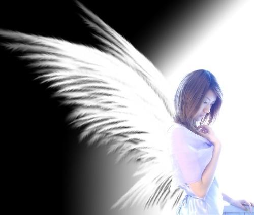 精灵们冷冷目光 让我们坠落在彼此的脚下 收不起你的黑色翅膀 只能在