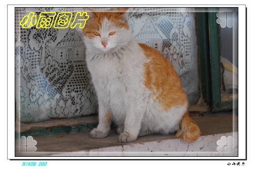 [图]趴在汽车发动机盖上睡觉的猫猫