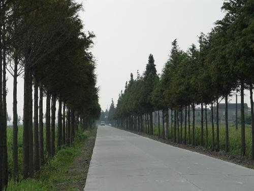 部分乡村公路也有不同的特点
