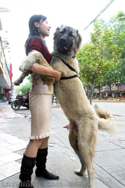 欧洲女人与狗交配_美女和狗配大全_美女和狗配汇总