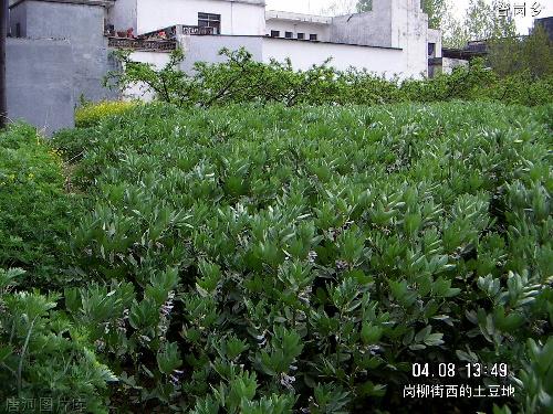 中性图片 风景植物