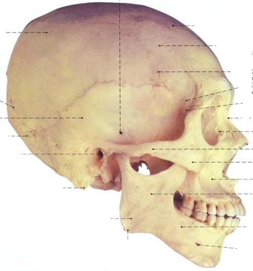 耳前瘘管的内部结构图