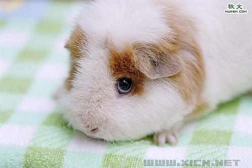 你可以购买市场上的饲养小动物的箱子或者土拨鼠类
