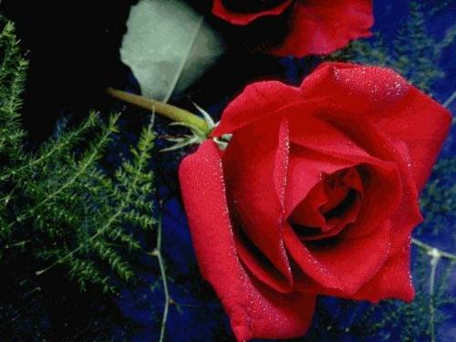 折纸:玫瑰花