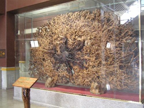 中华根(是一棵巨大的榕树树根雕成)
