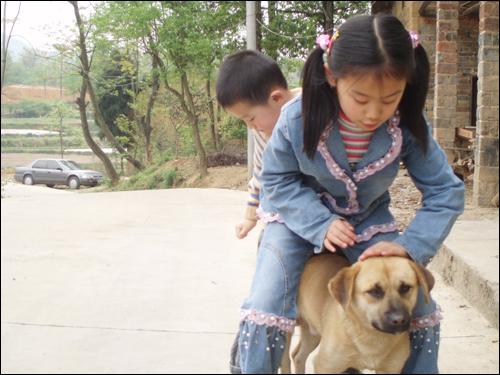 [原创]回乡所见(一) 可爱的动物 - 搜狐社区